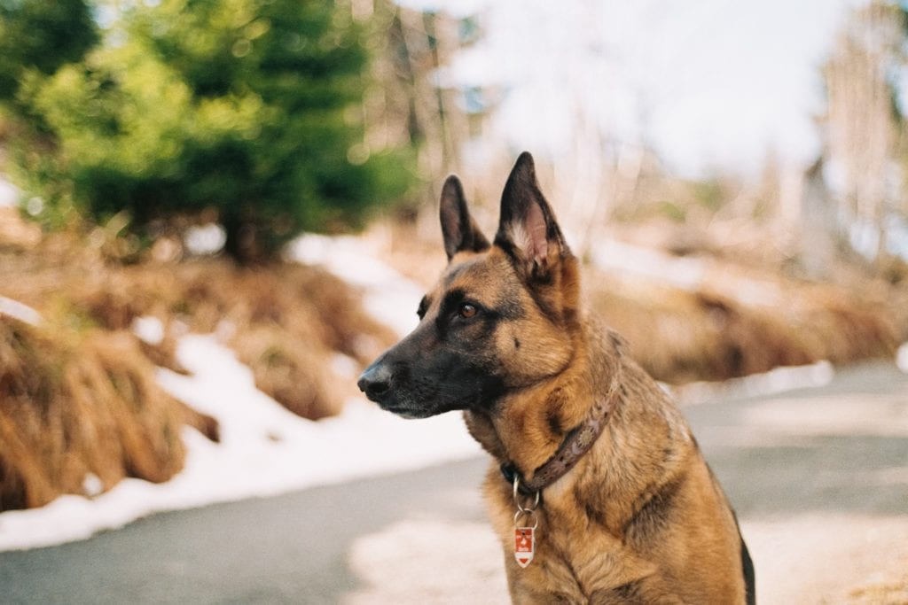 How To Train Your Pet For Dog Protection? Important Things To Know