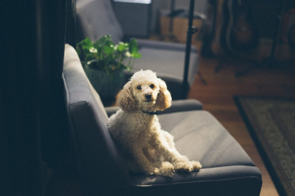 Top 5 Dog Clicker Advantages To Use It Better