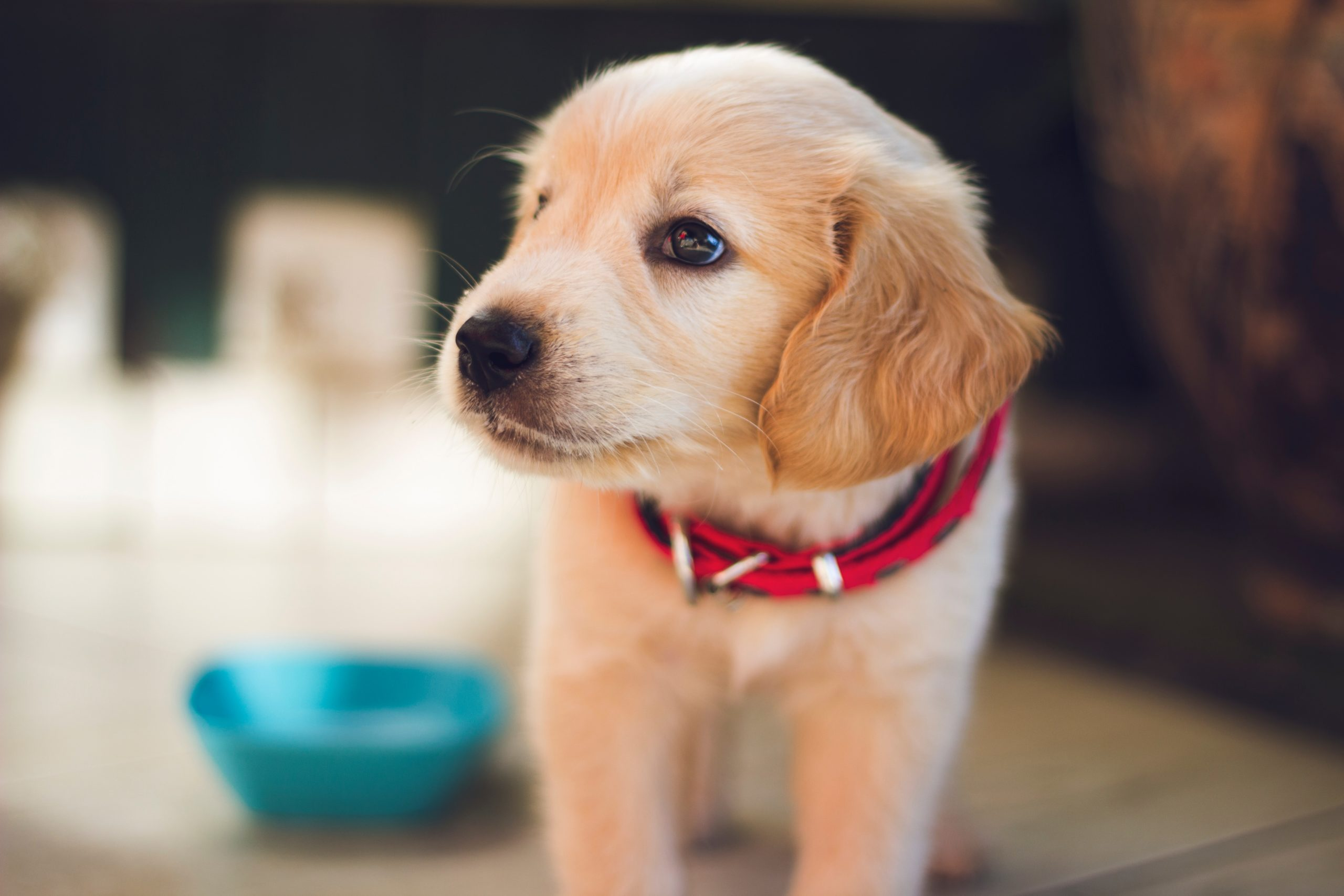 Top 5 Simple Puppy Toilet Training Things To Help You