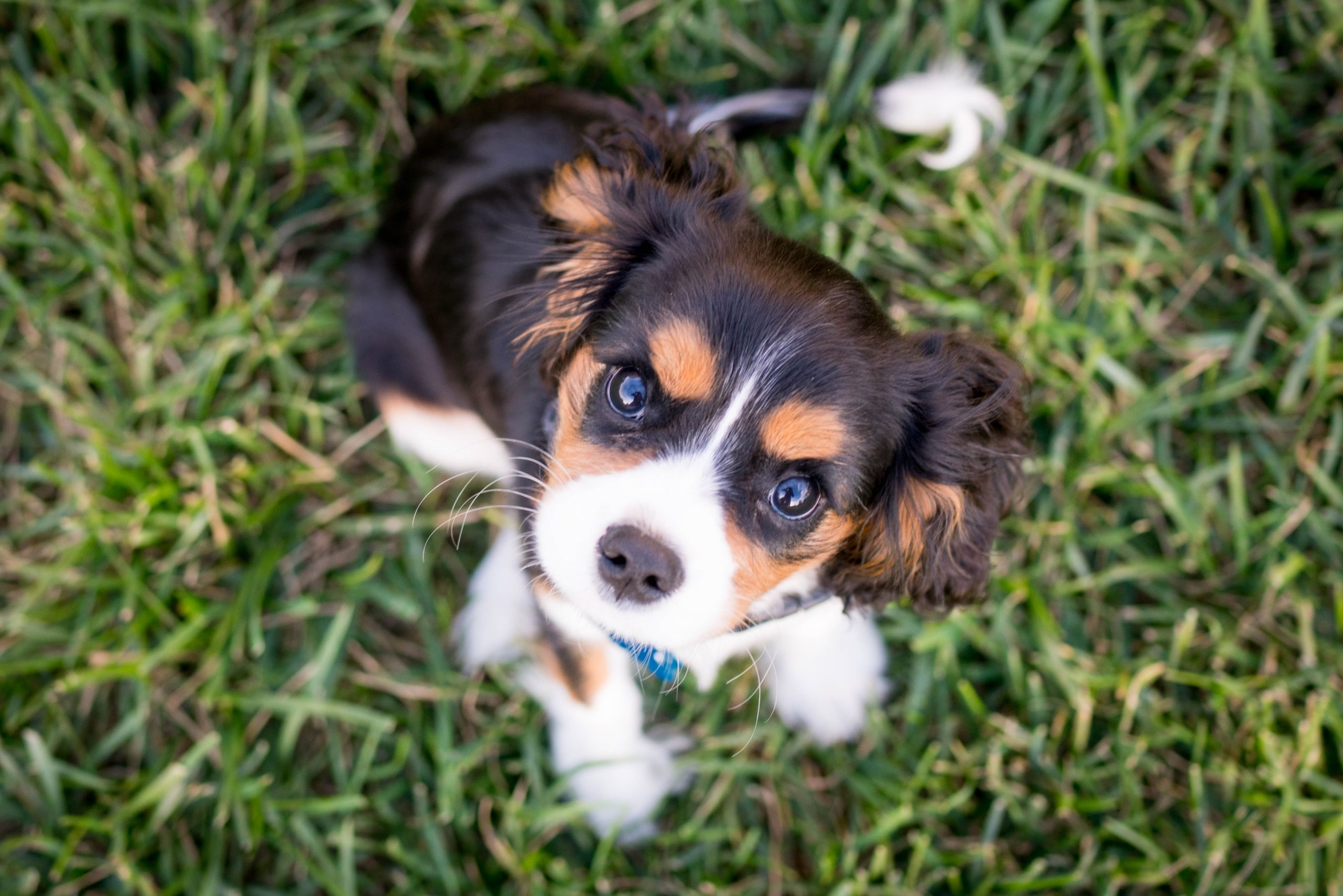Top 5 Reasons On Puppy Biting And How To Overcome Them