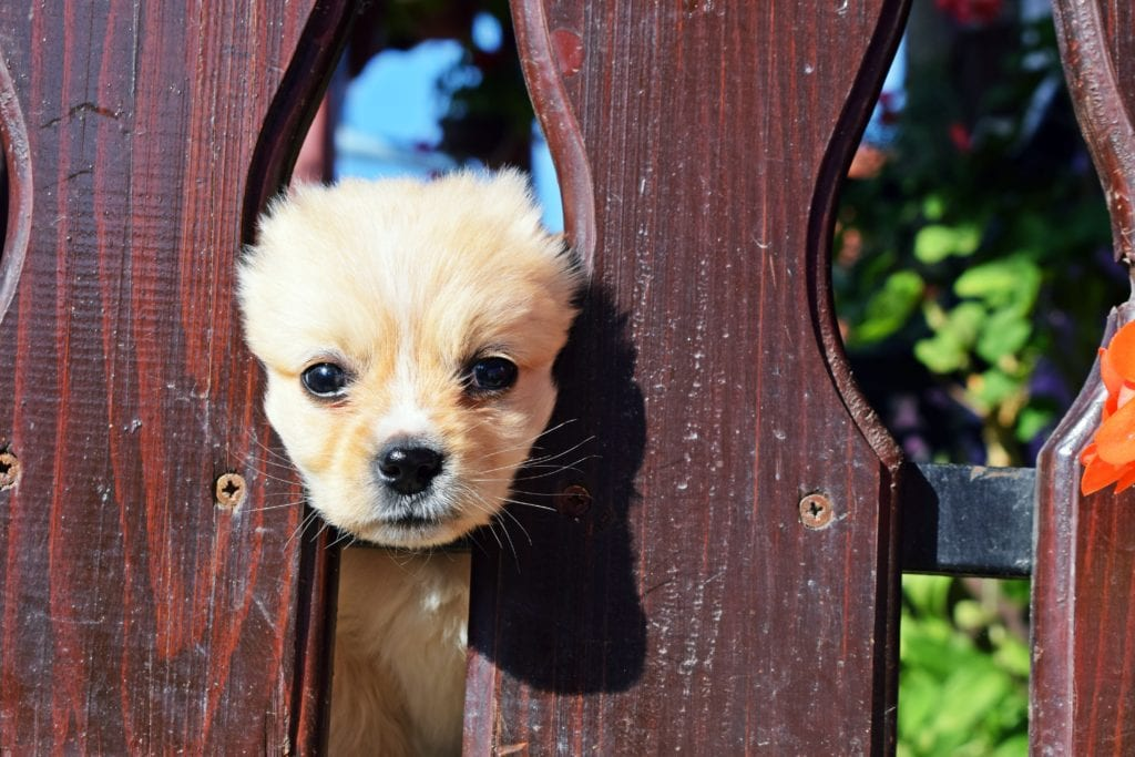 Ultimate Guide To Puppy Toilet Training- Guide For Making Them Trained