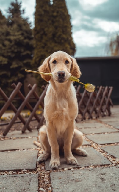 What Are The Top 5 Smartest Dog Breeds In The World?