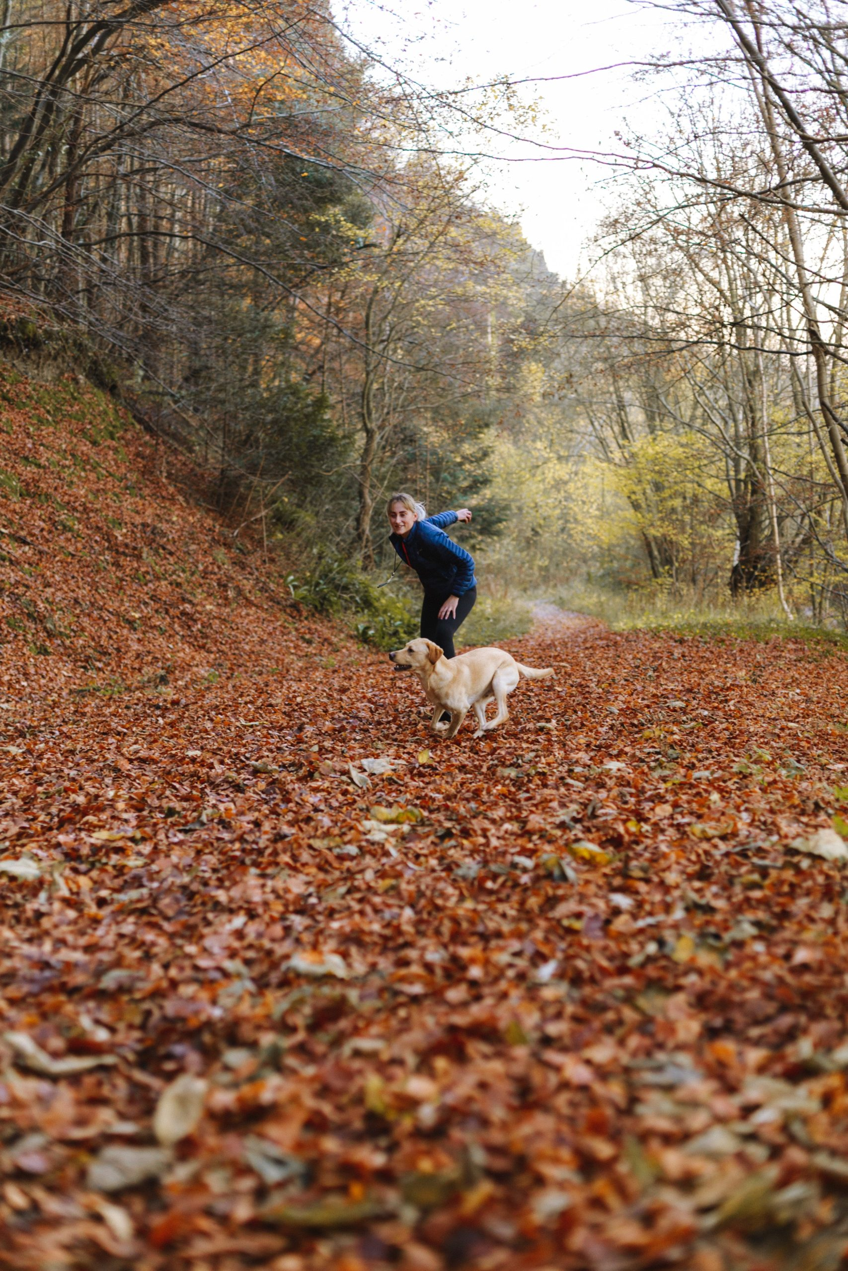 The Basic Training Of A Dog That You Should Know