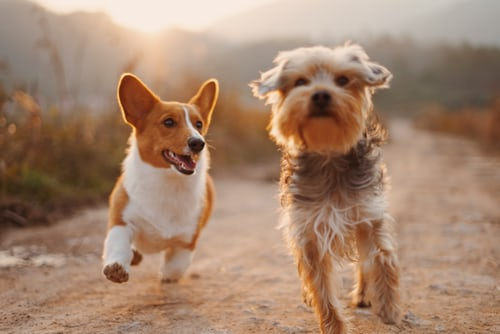 Tips For Finding The Best Dogs