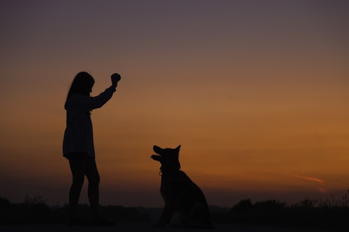 Dog Training Ideas - Safe Walking And Trained Hands