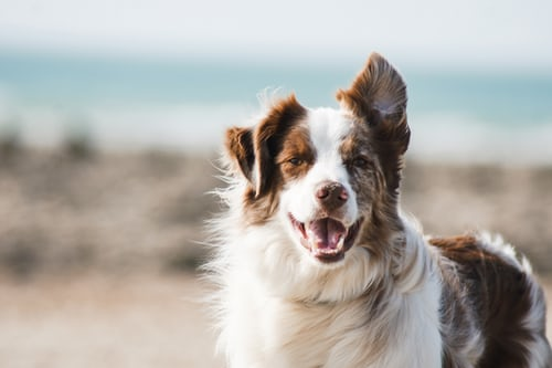 Concept Of Dog Commands: Basic Right Commands